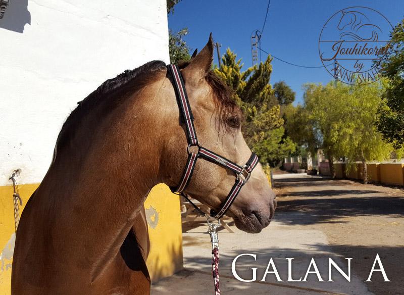 Galan A